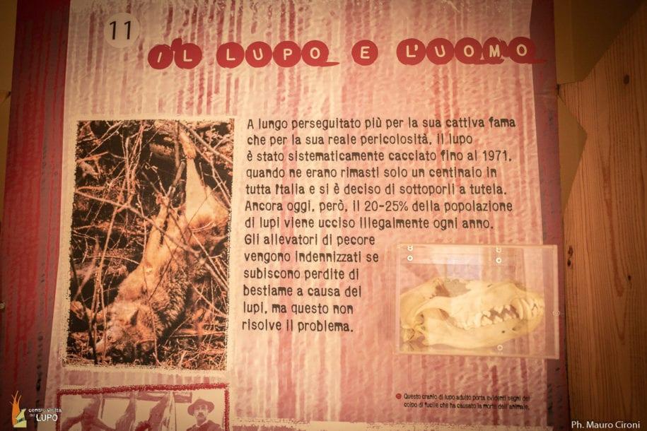 centrovisita-lupo-popoli-animali-selvatici-recupero-10